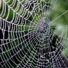 SpiderWeb 140